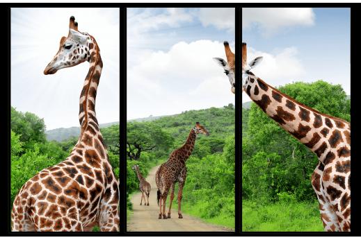 Жирафы картина из 3 частей